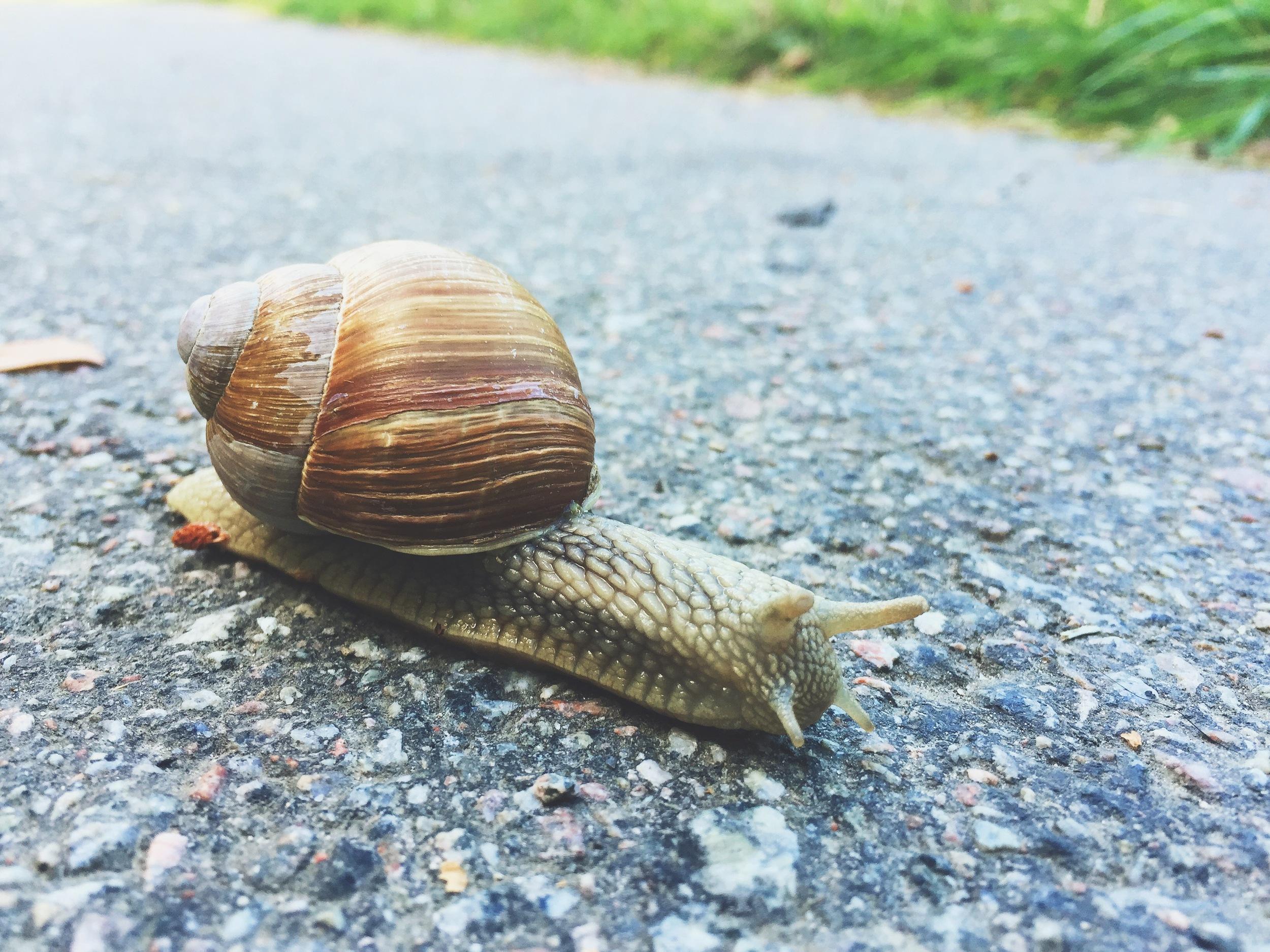 Just another slug photo.