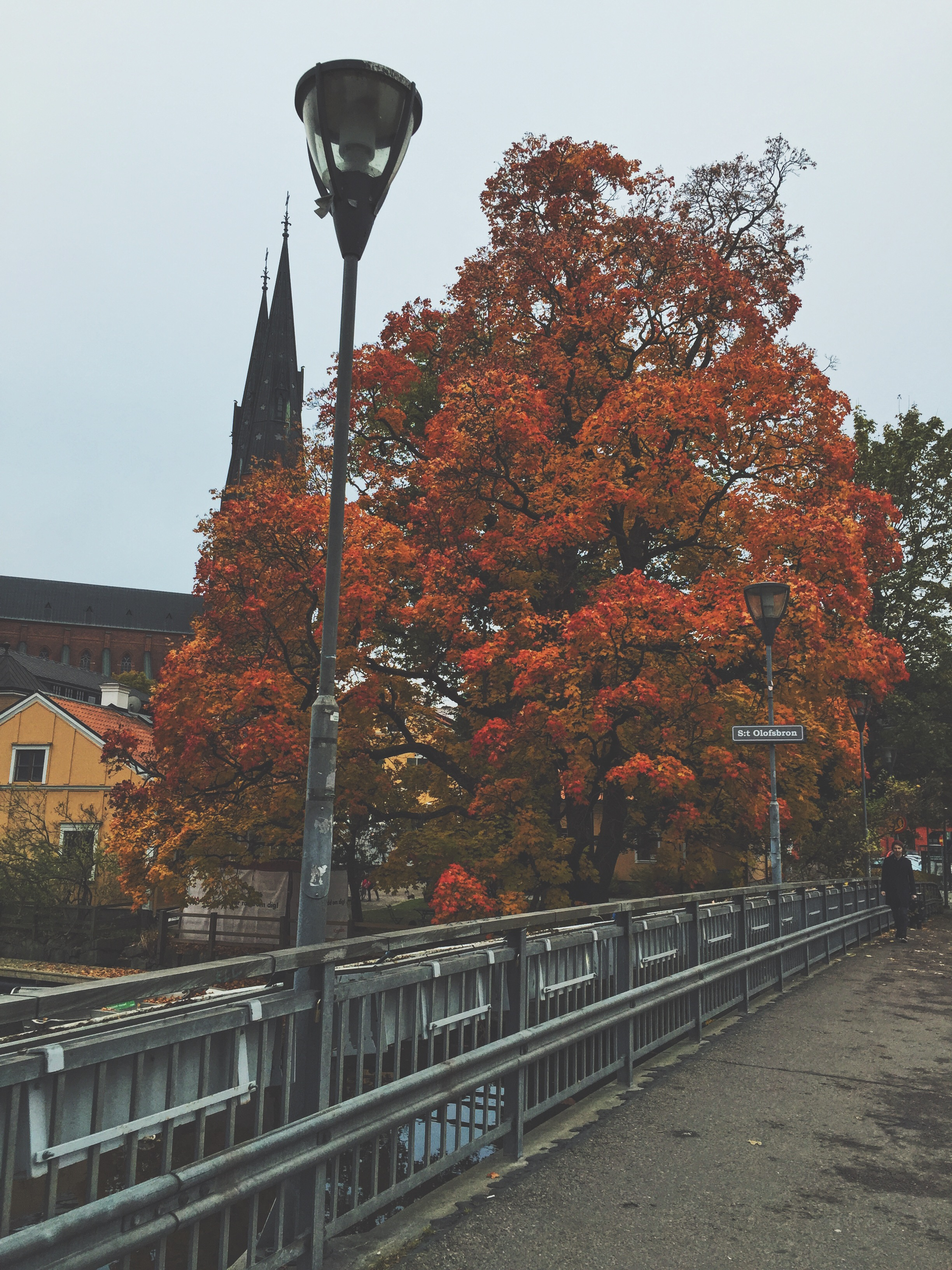 Fall foliage on one of the main streets in Uppsala.