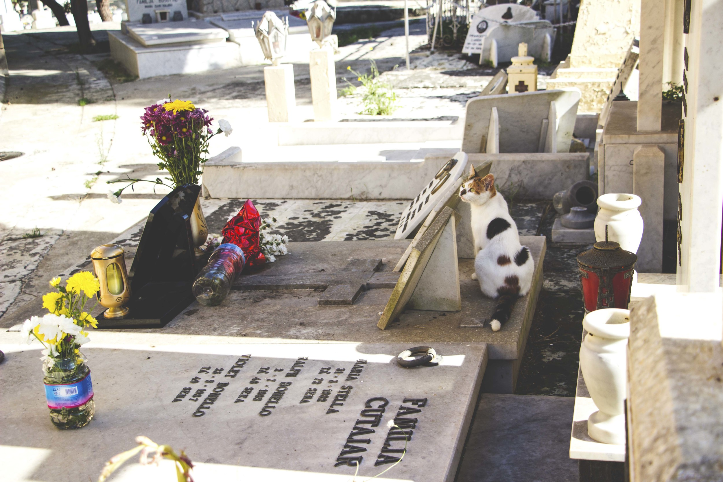 A cat watches over a grave inside the Malta (Capuccini) Naval Cemetery.