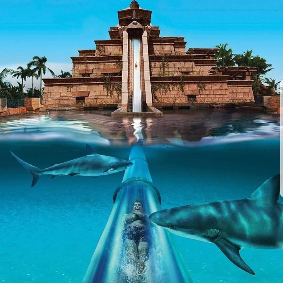Speedo Atlantis 2.jpg