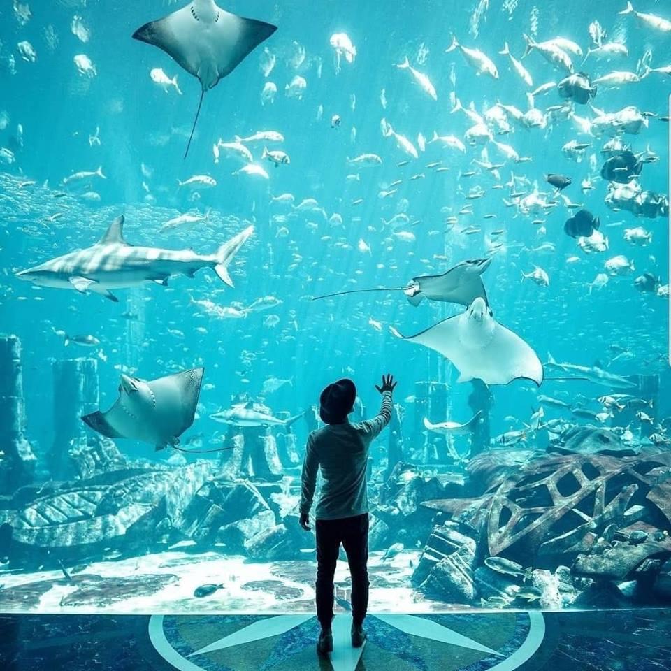 Speedo Atlantis 3.jpg