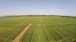 scottish agronomy.jpg