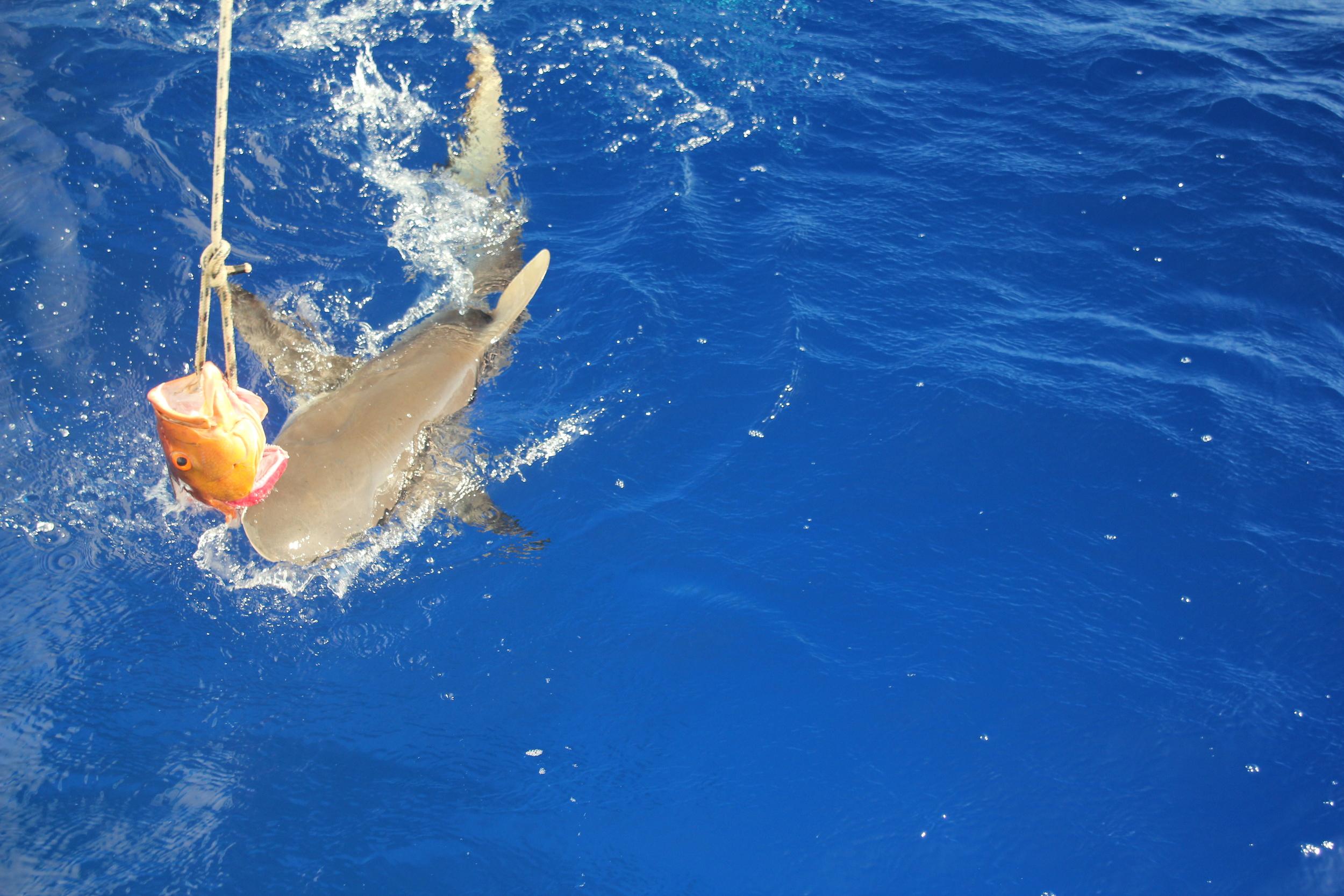 shark6.JPG