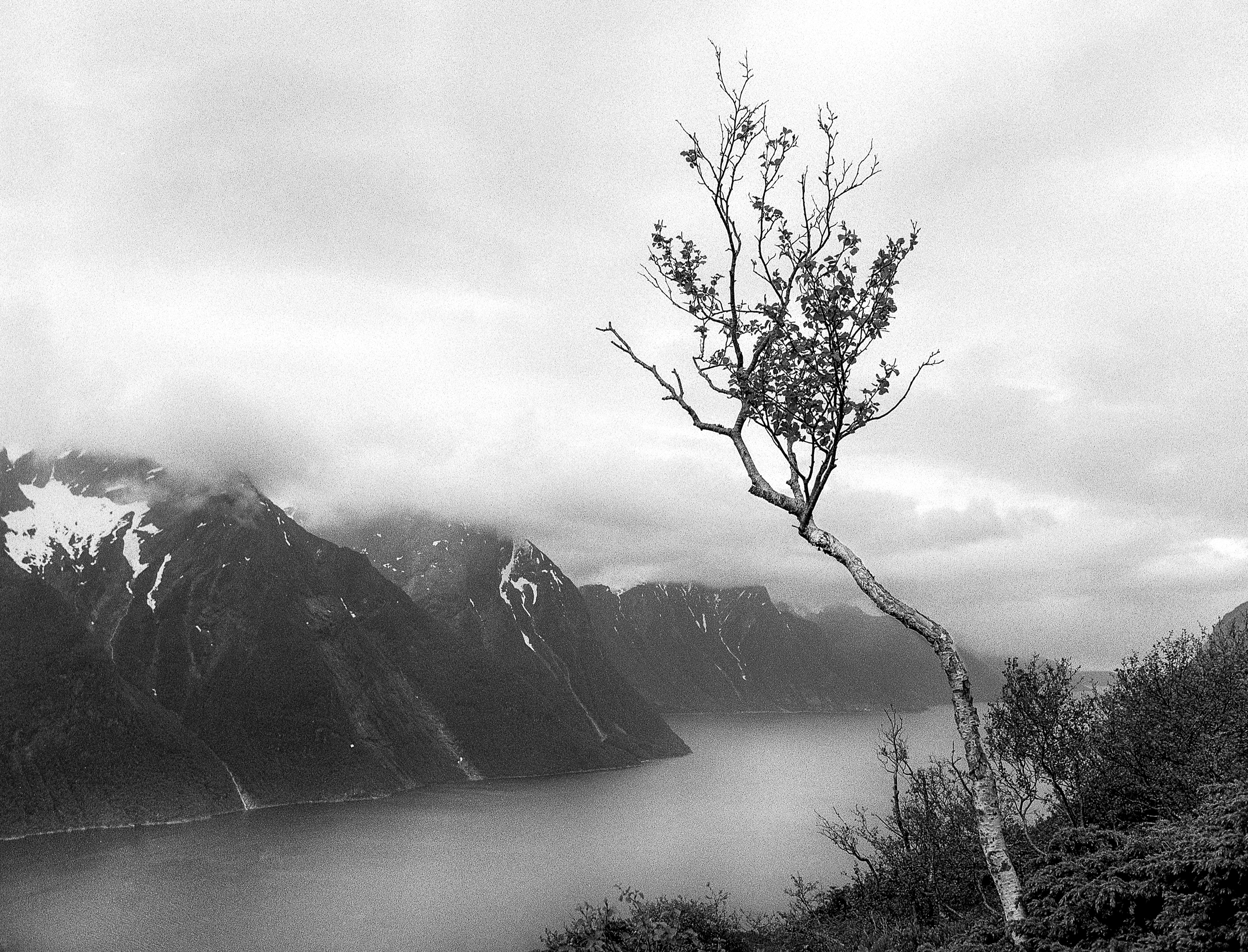 Way Of The Fjord-9.jpg
