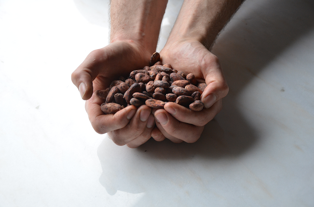 Cacaoinhand.png