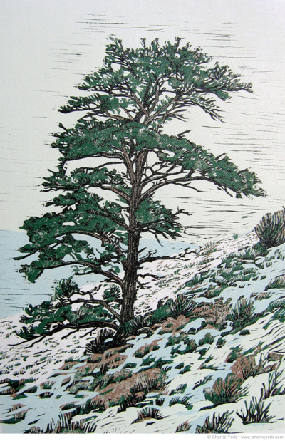 Early Snow – Ponderosa Pine eduction linocut, Edition of 12 Image size 18″ x 12″ Hand printed on Hosho paper