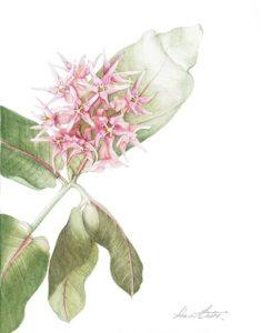 Botanica-2-235x300.jpg