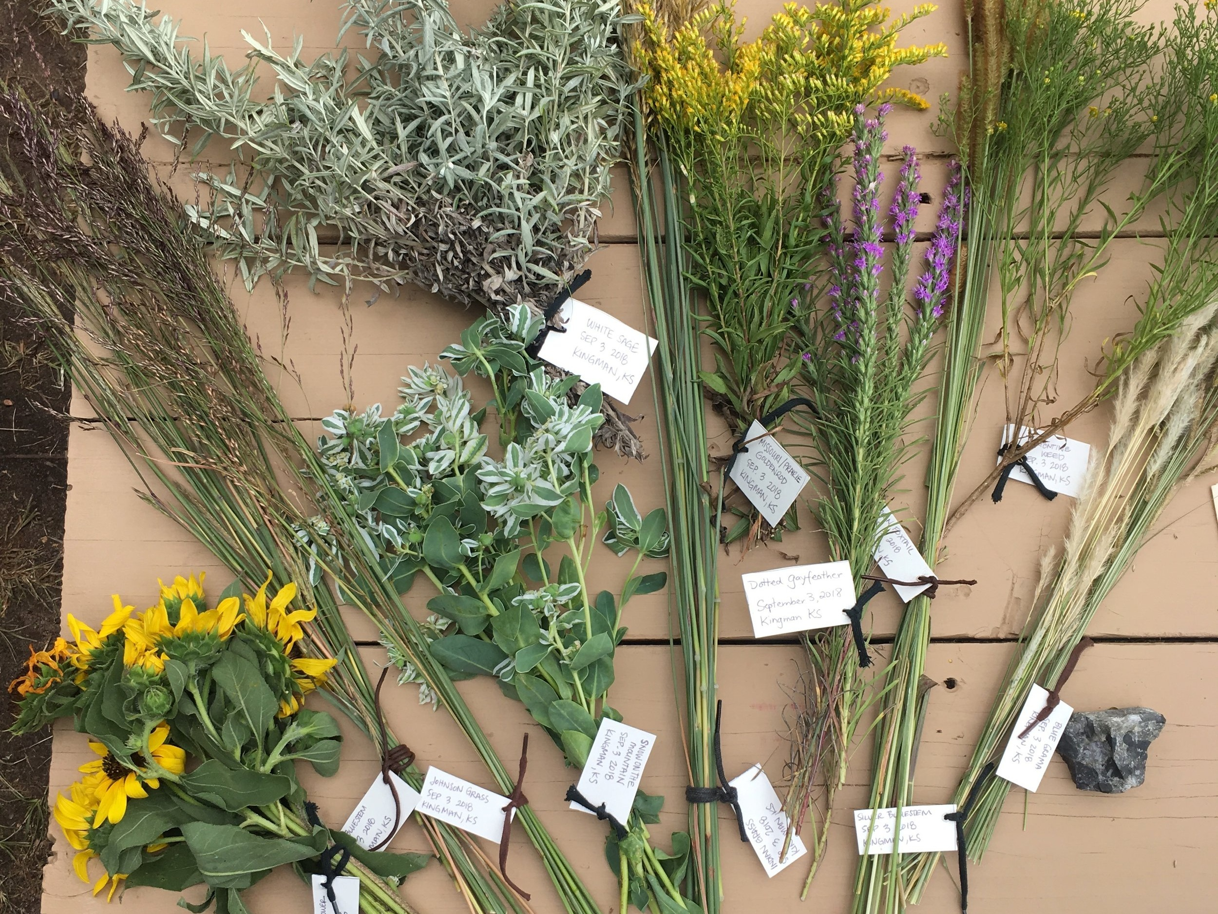 Prairie grasses and flowers harvested and cataloged. (sept 2018)