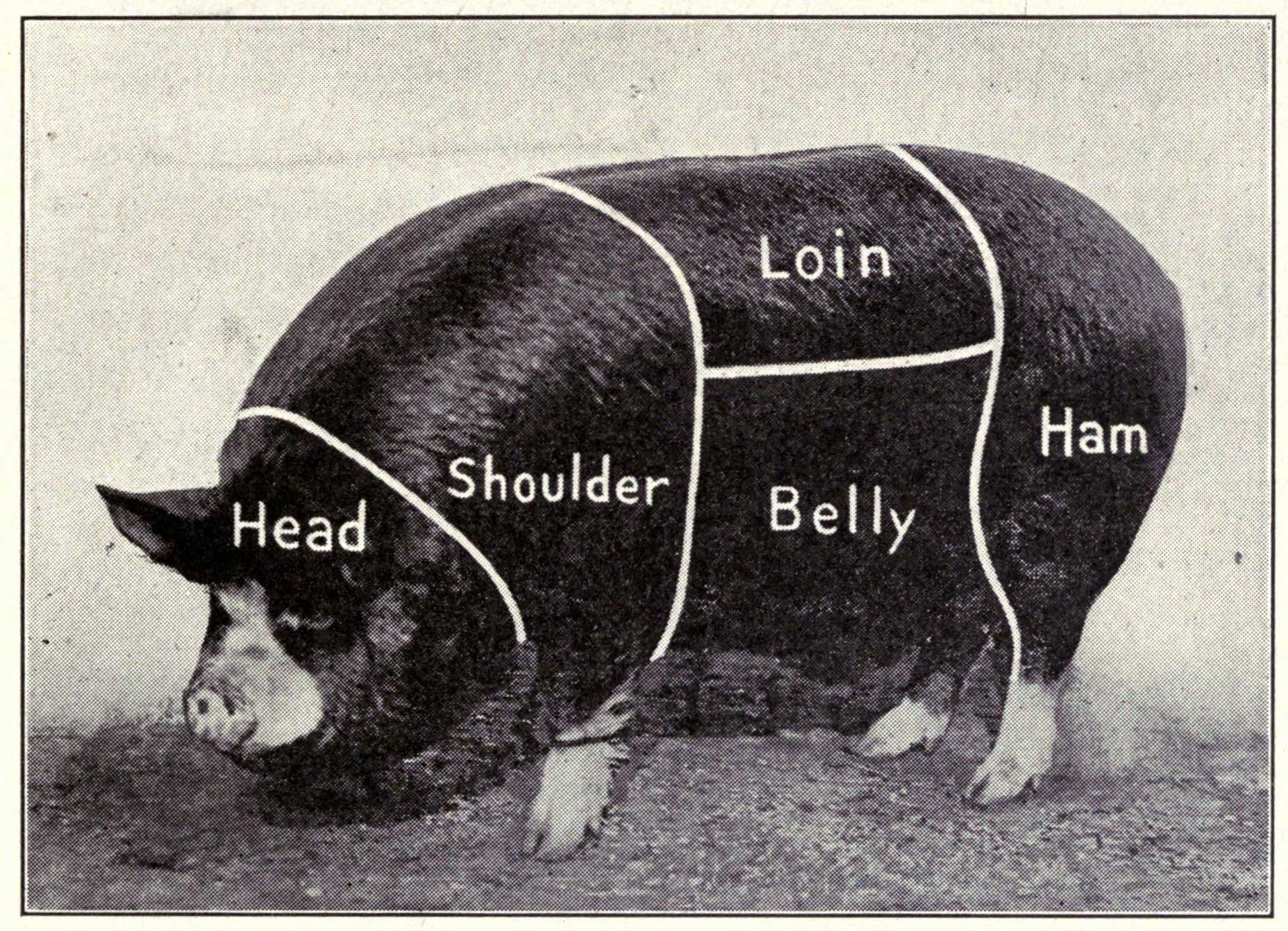 From  Southern pork production , 1918