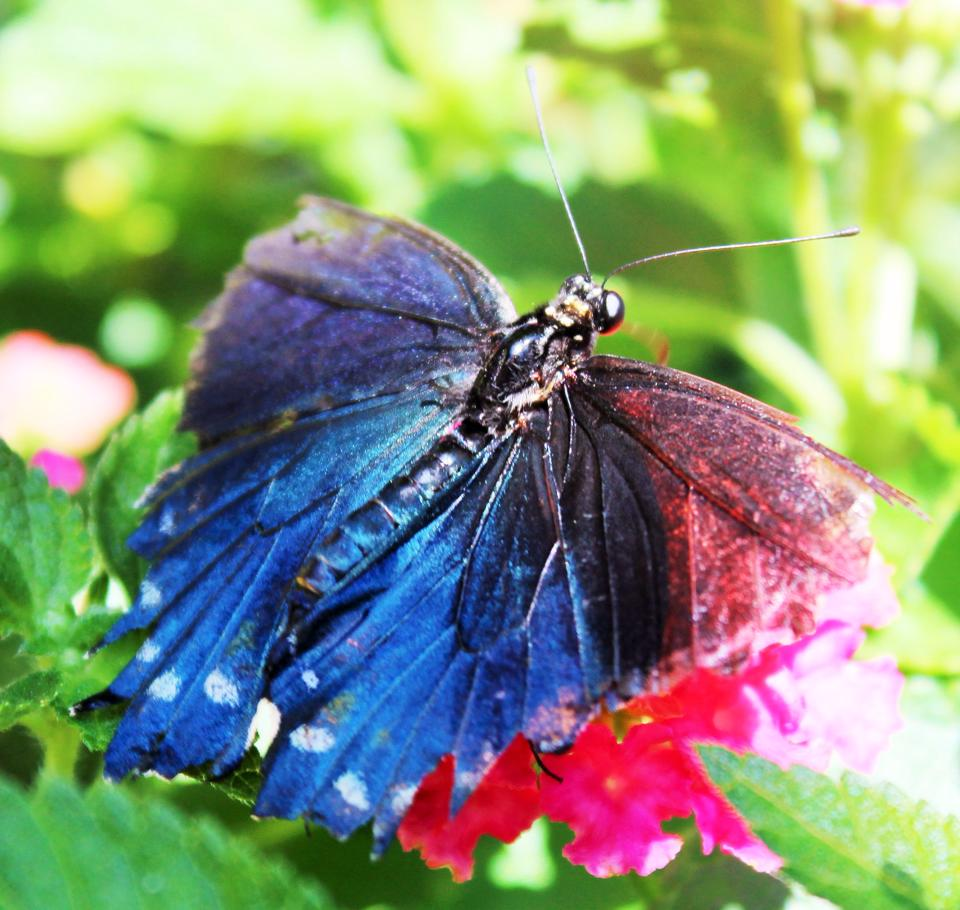 You are a beautiful butterfly!