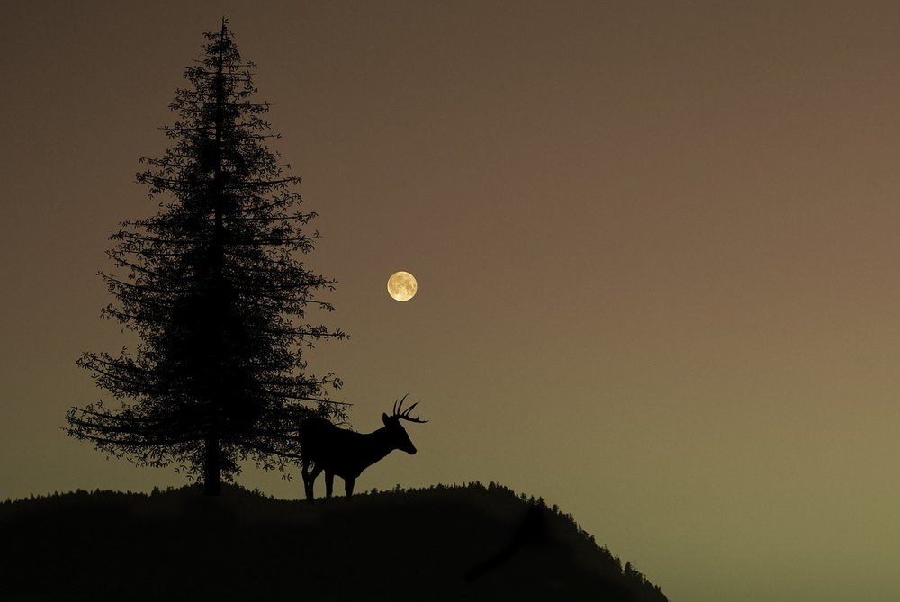 A Magical Gathering & Drumming for the Full Buck Moon