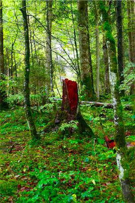 4 Roter Baumstrunk *