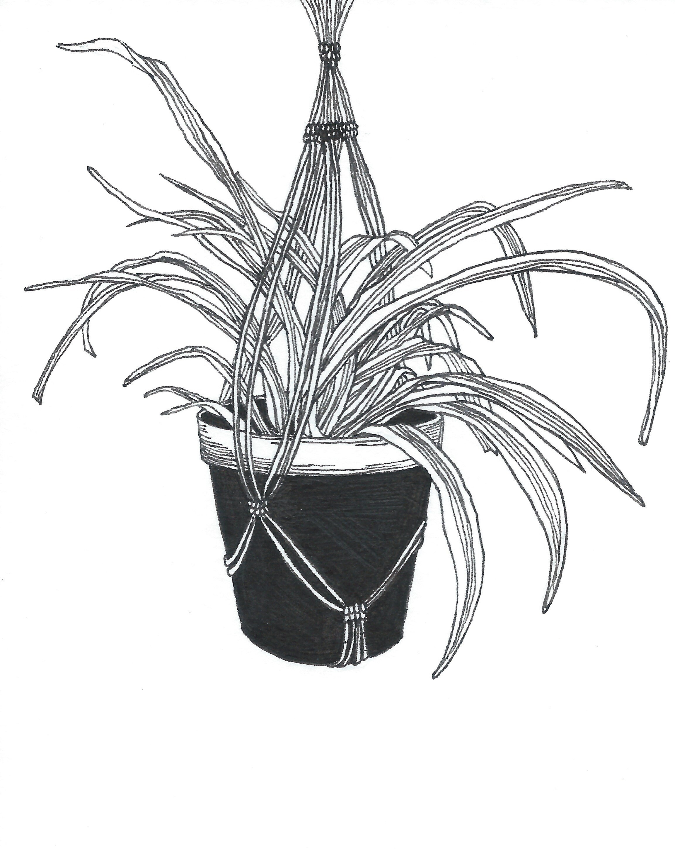 Drawings Plant Series Jessica Beck
