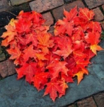 Hart in herfst (2).jpg