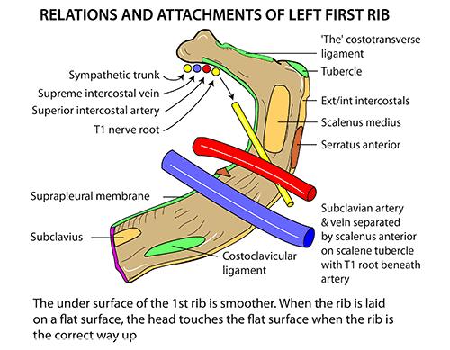 source, instantanatomy.net
