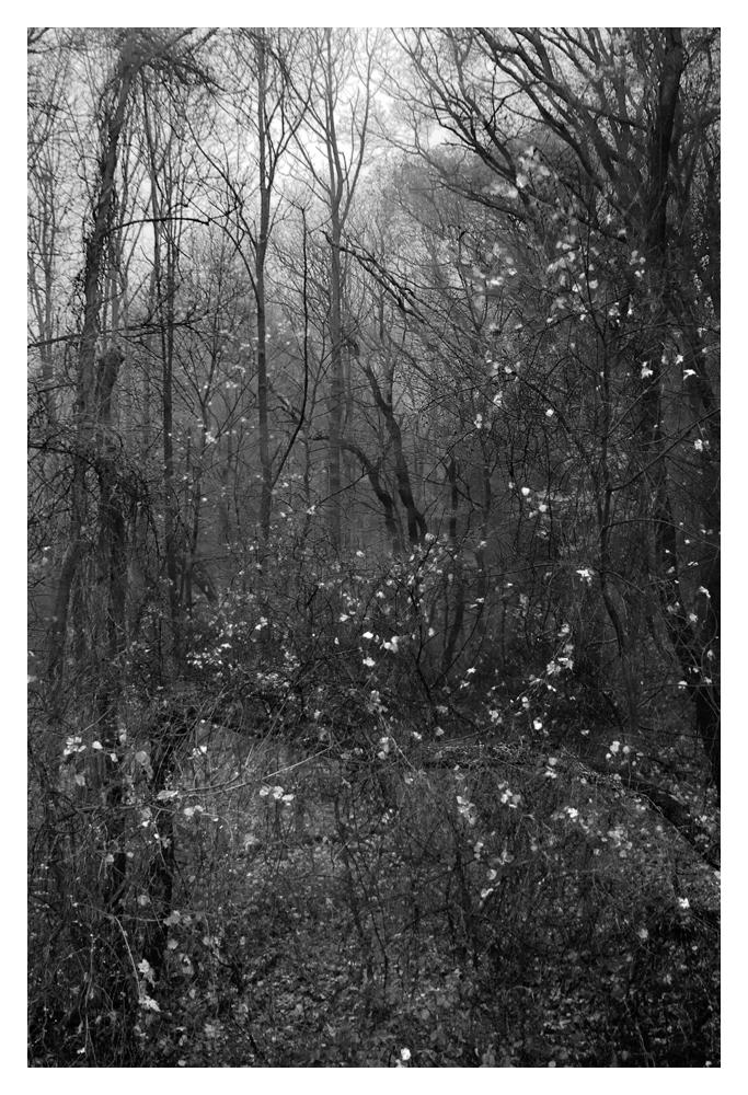 intothewoodsframe.jpg
