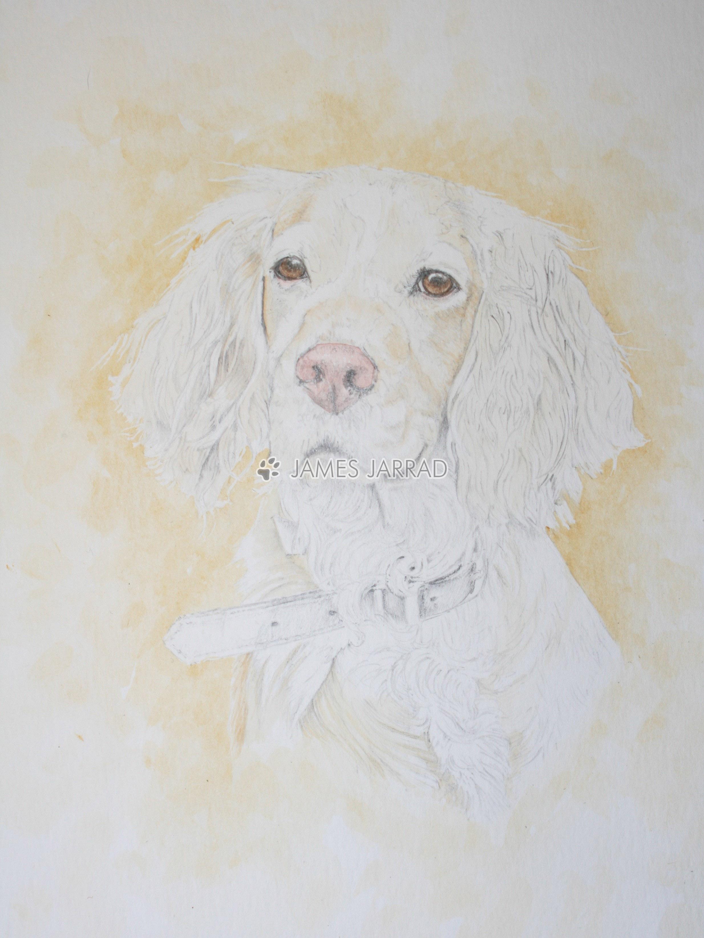 Tilly 1.jpg