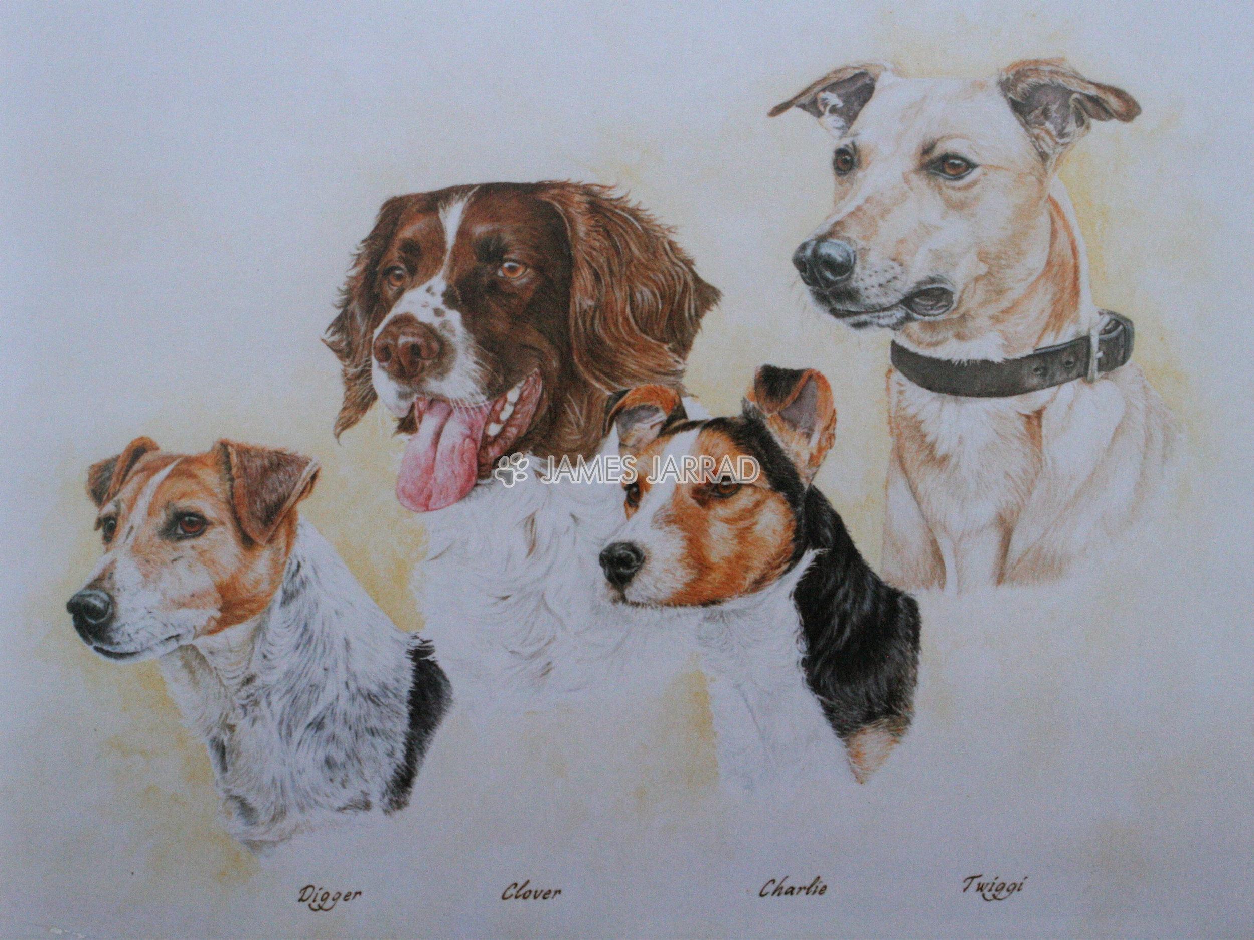 Collins' Dogs.jpg