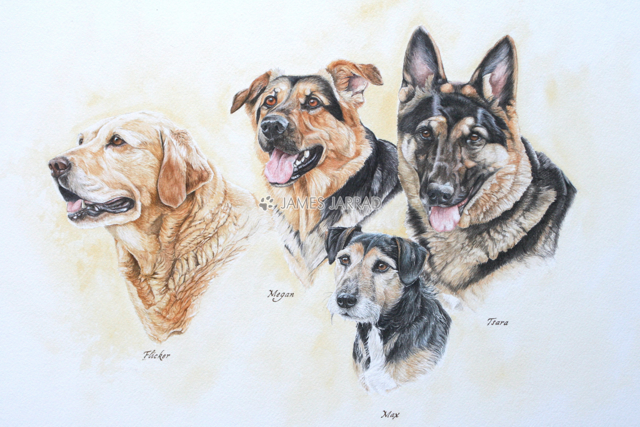 Johnsons' dogs.jpg