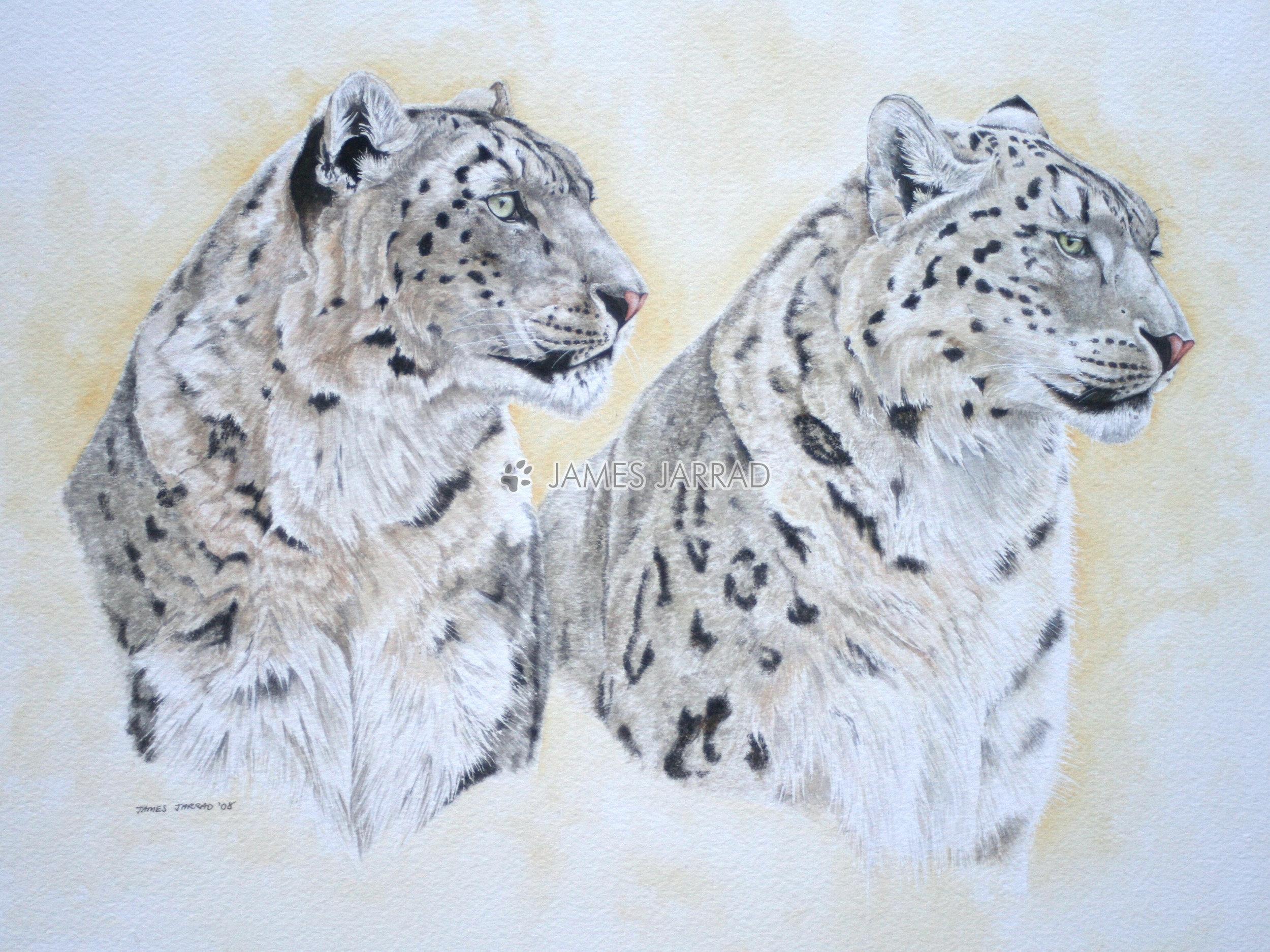 Snow Leopards.jpg