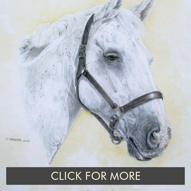 HorsesPage02_0000_Mill End Billy a coloured sketch.JPG.jpg