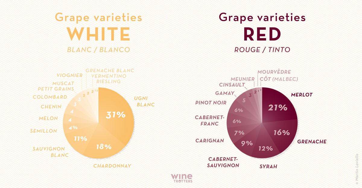 wine-TROTTERS_oenotourisme_wine-tourism-graphic-diagram-grape-varieties-France_02_WEB