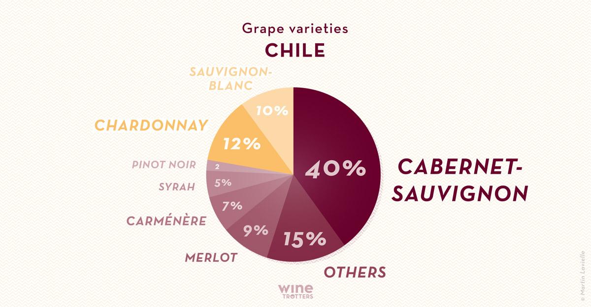 wine-TROTTERS_oenotourisme_wine-tourism-graphic-diagram-vino-grape-varieties-Chile_02_WEB