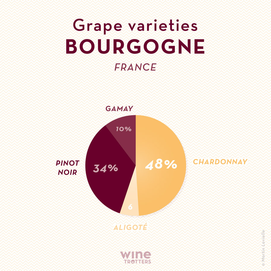 wine-TROTTERS_oenotourisme_wine-tourism-graphic-diagram-grape-varieties-France-Bourgogne_02_WEB