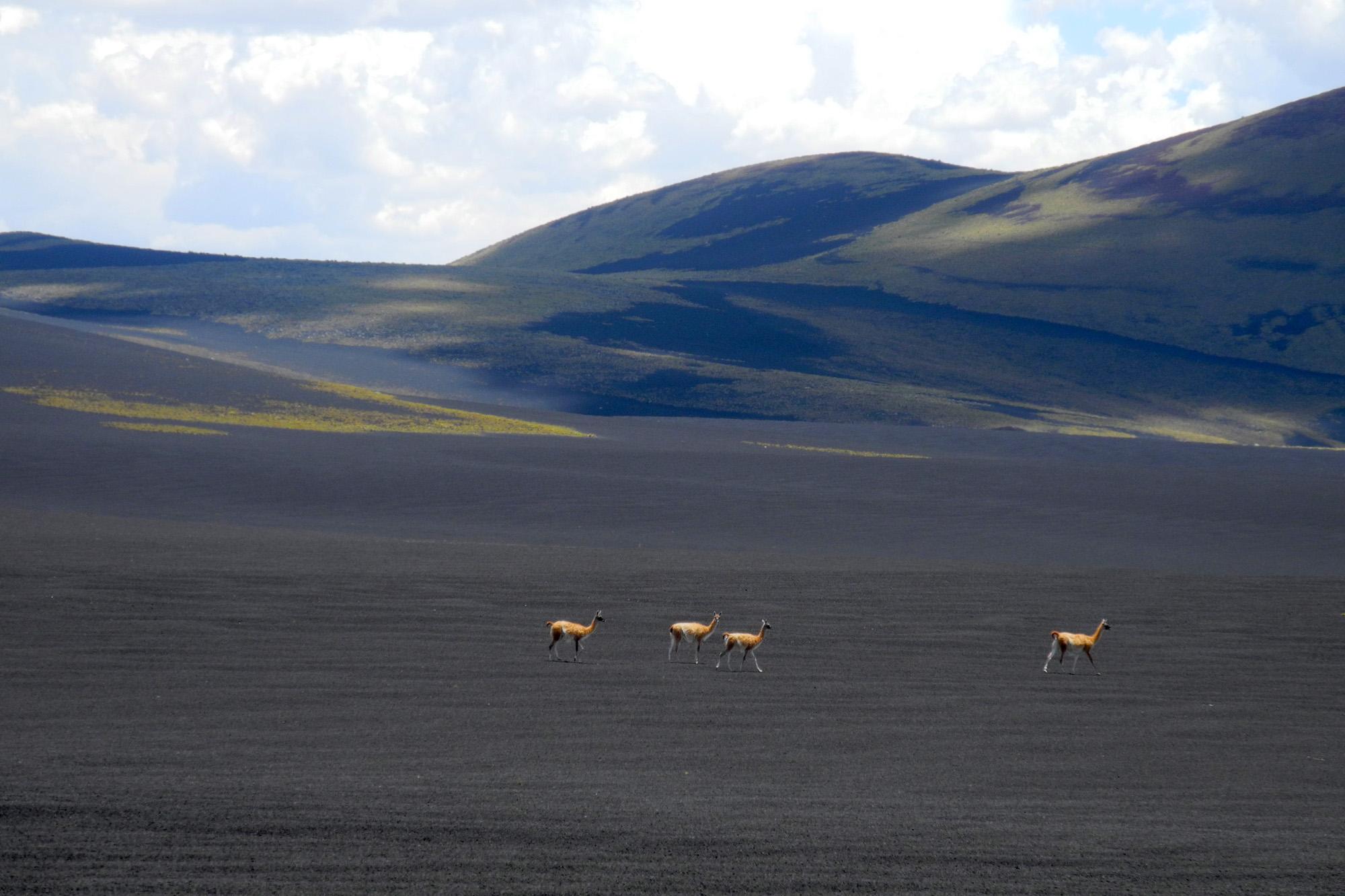 wine-TROTTERS_oenotourisme_wine-tourism-agency_tour_vino_vin_turismo_ARGENTINA_Mendoza_trekking_hiking_horseback-riding_alta-montana_Andes_16_WEB-2000px.jpg