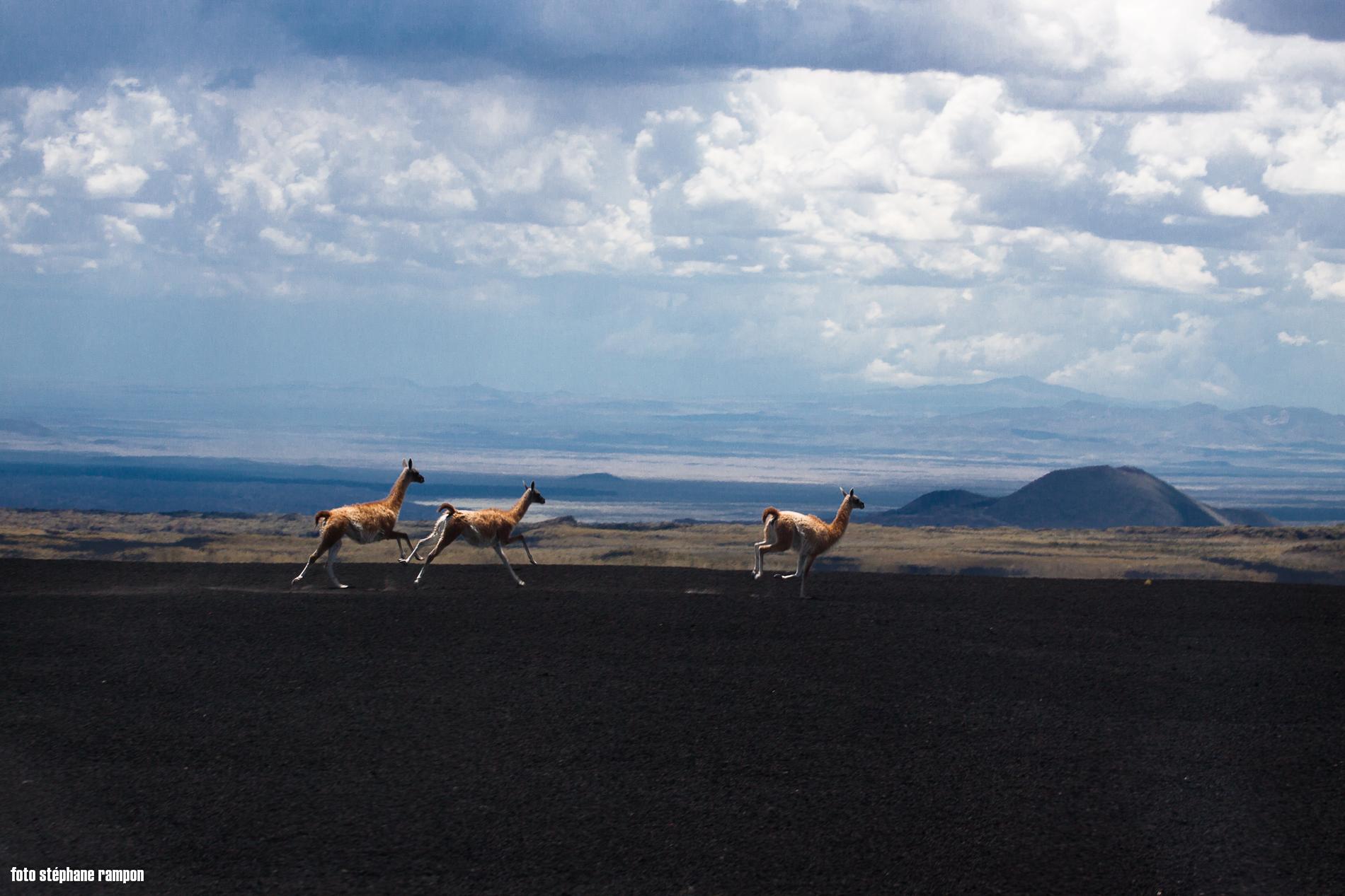 wine-TROTTERS_oenotourisme_wine-tourism-agency_tour_vino_vin_turismo_ARGENTINA_Mendoza_trekking_hiking_horseback-riding_alta-montana_Andes_55.jpg