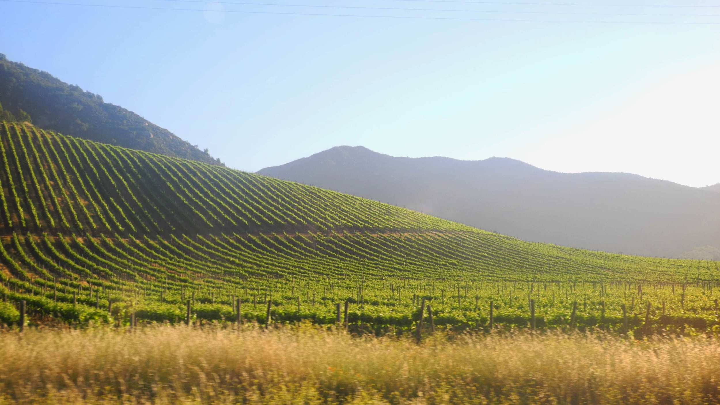 DISCOVER OUR EXPERIENCE OF CHILEAN VINEYARDS     CHILE EXPERTISE