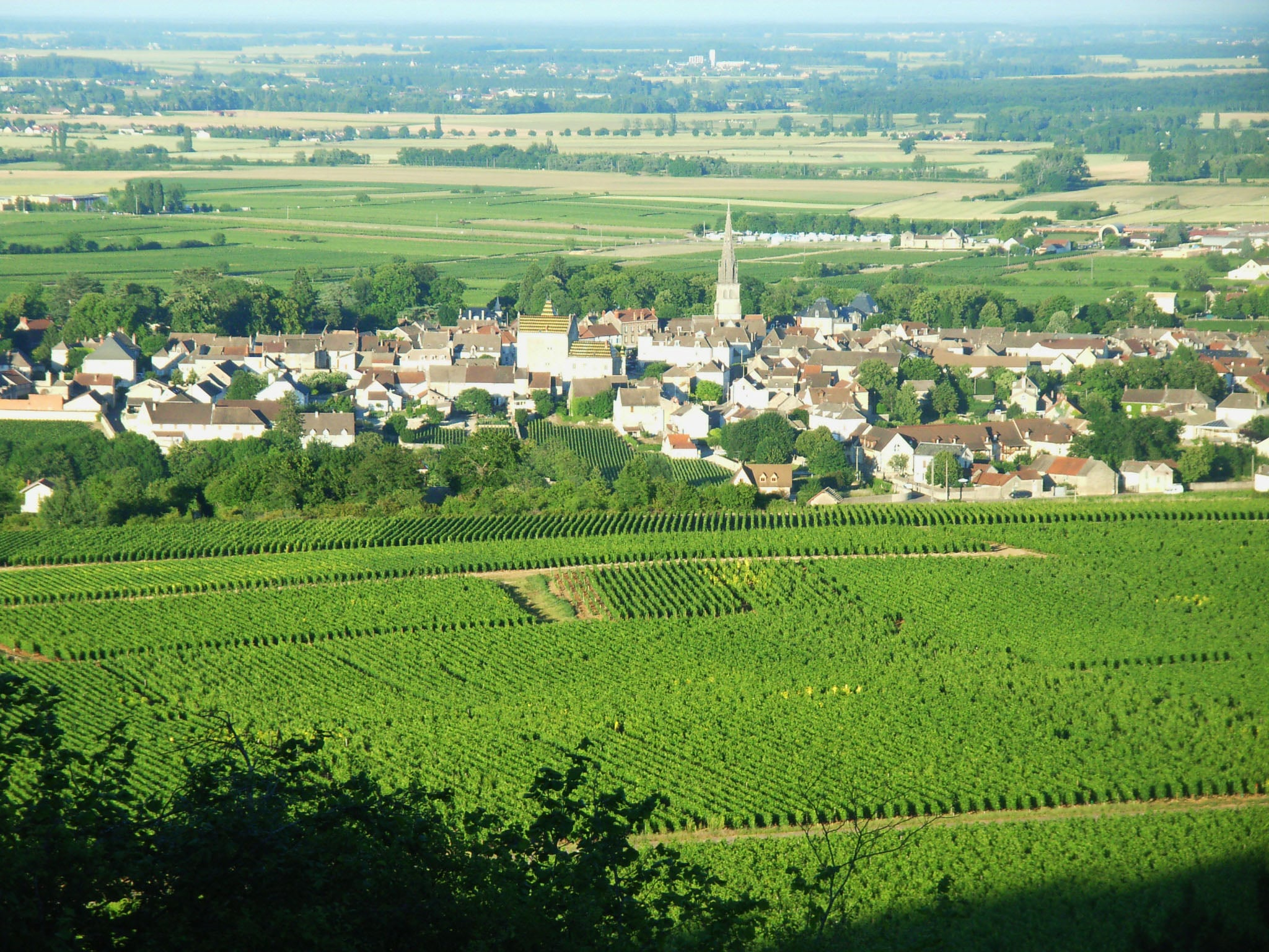 DISCOVER OUR FRENCH VINEYARDS EXPERTISE     FRANCE EXPERTISE