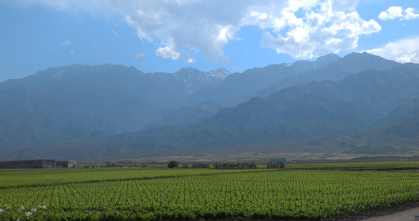 wine-TROTTERS_wine-tourism-agency_tour_wineries_vineyards_gastronomy_passion_Andes_29.jpg