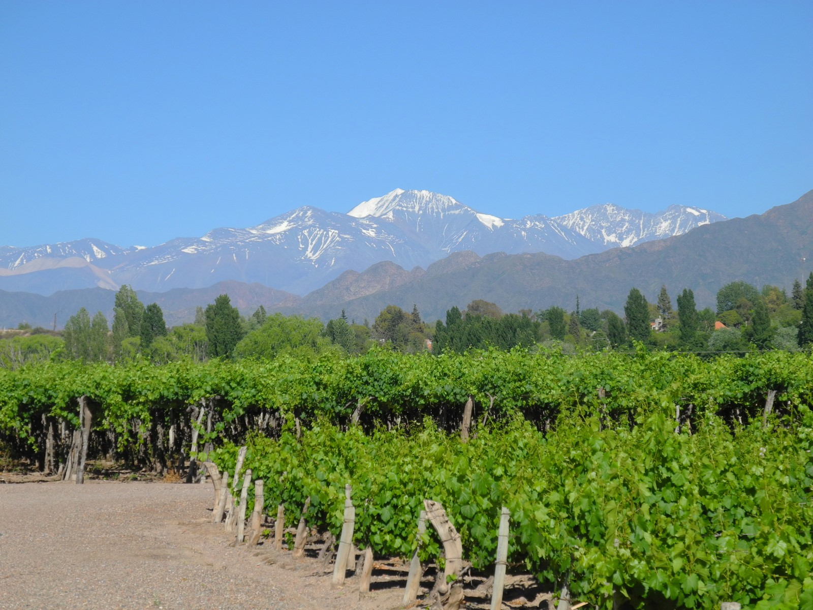 wine-TROTTERS_wine-tourism-agency_tour_wineries_vineyards_gastronomy_passion_Andes_30.jpg