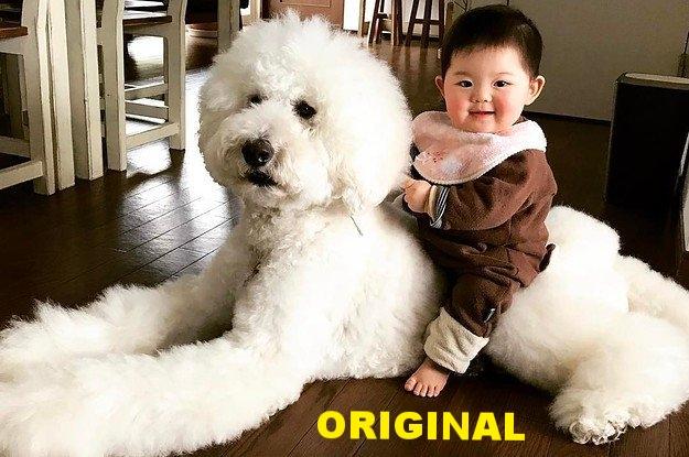 baby on dog.jpg