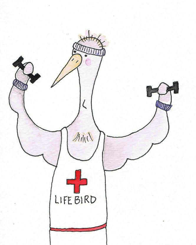 lifebird.jpg