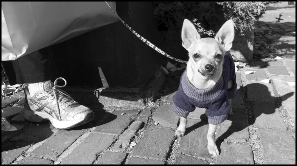 dog_colourspots-1024x575.jpg