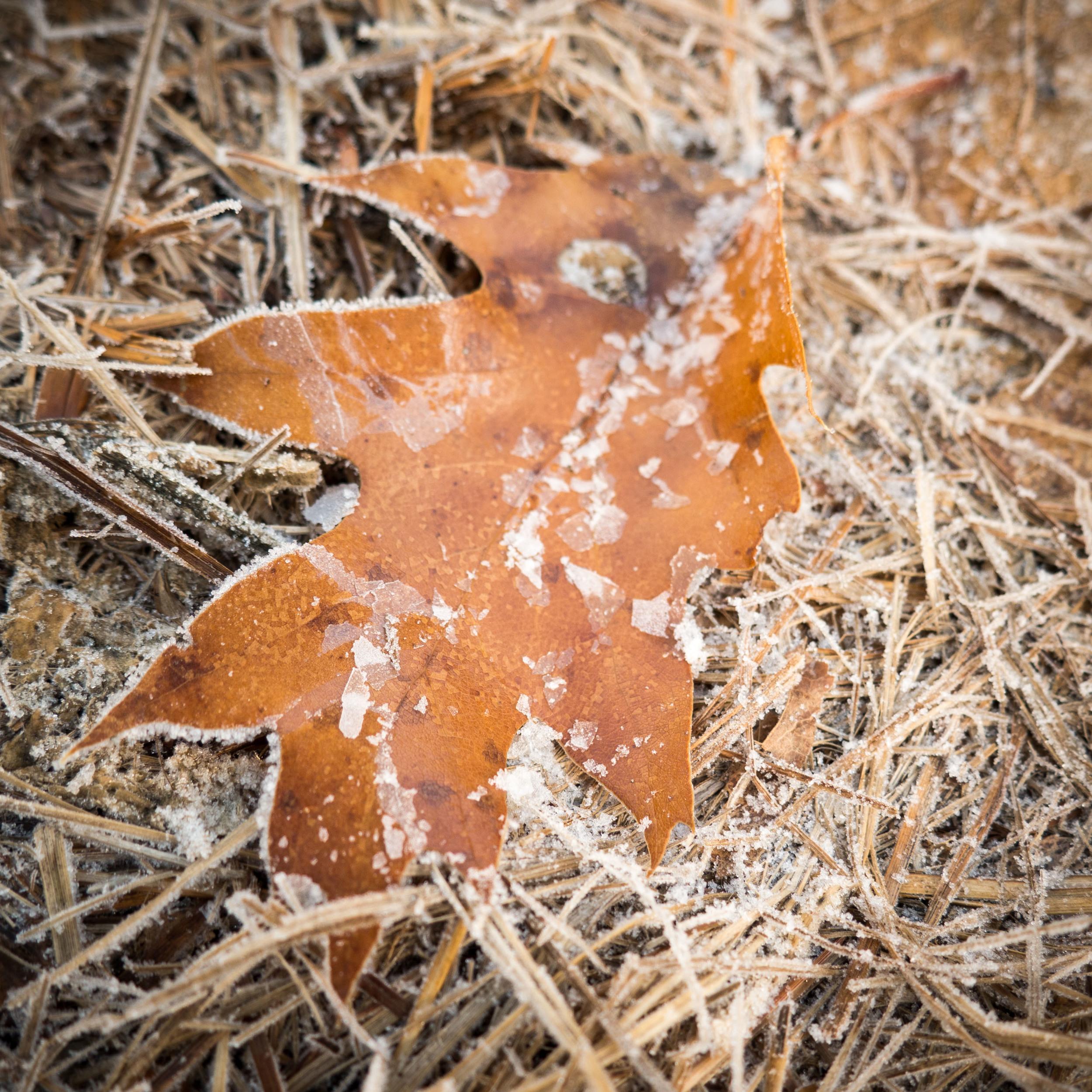 frozen_leaf3.jpg