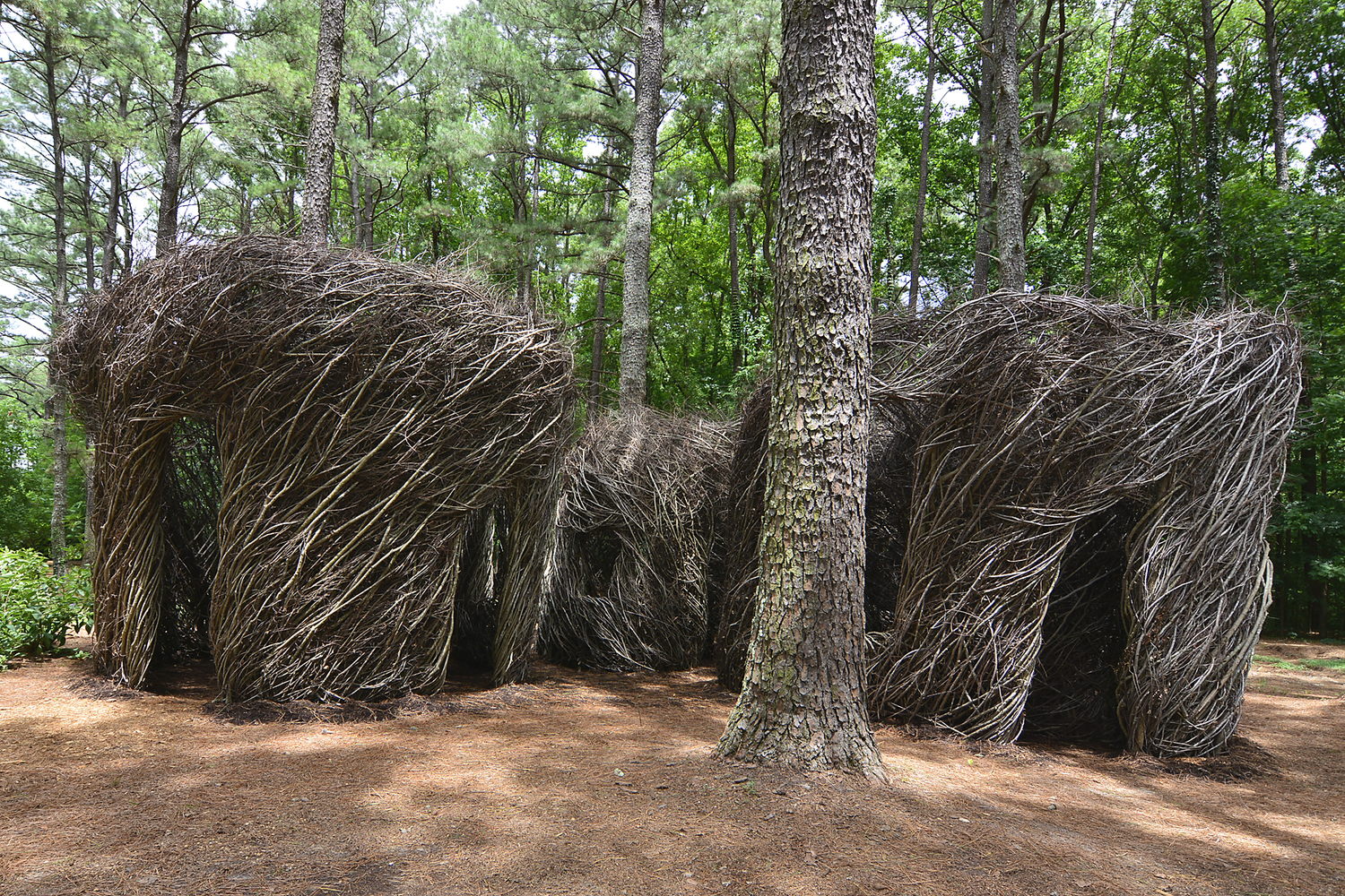 06 2015 Just Beyond The Forest Curtain Cape Fear Botanical Garden Fayetteville Nc Patrick Dougherty