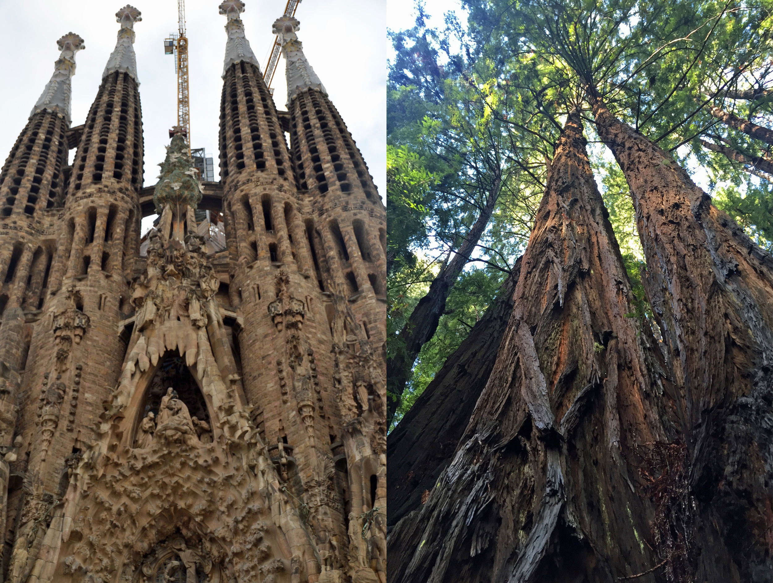 La Sagrada Familia (October 2015) and Muir Woods (January 2016).