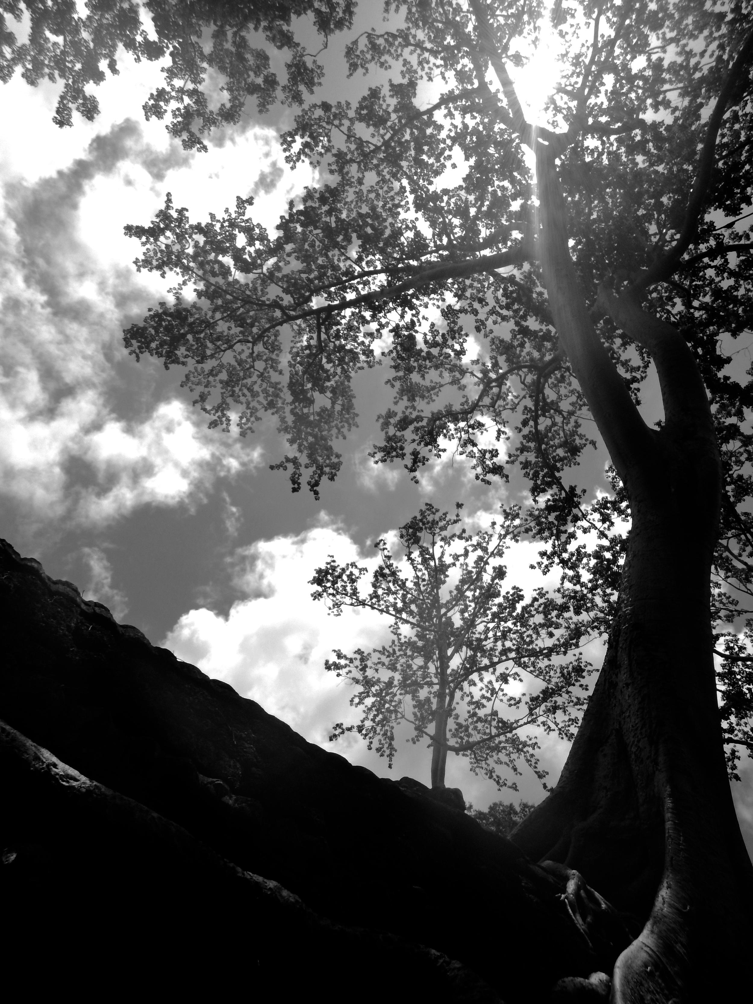 Ta Prohm tree, Siem Reap, 2016.
