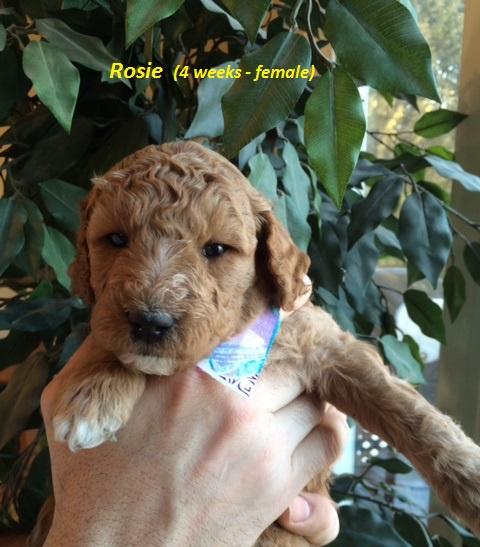 Rosie - 4 weeks.jpg