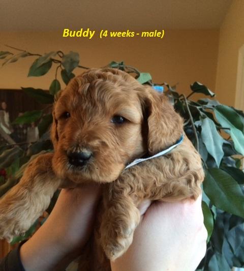 Buddy - 4 weeks.jpg