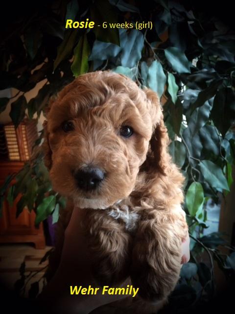 Rosie - 6 weeks.JPG