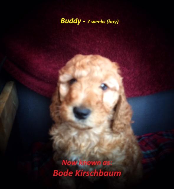 Buddy 2.jpg