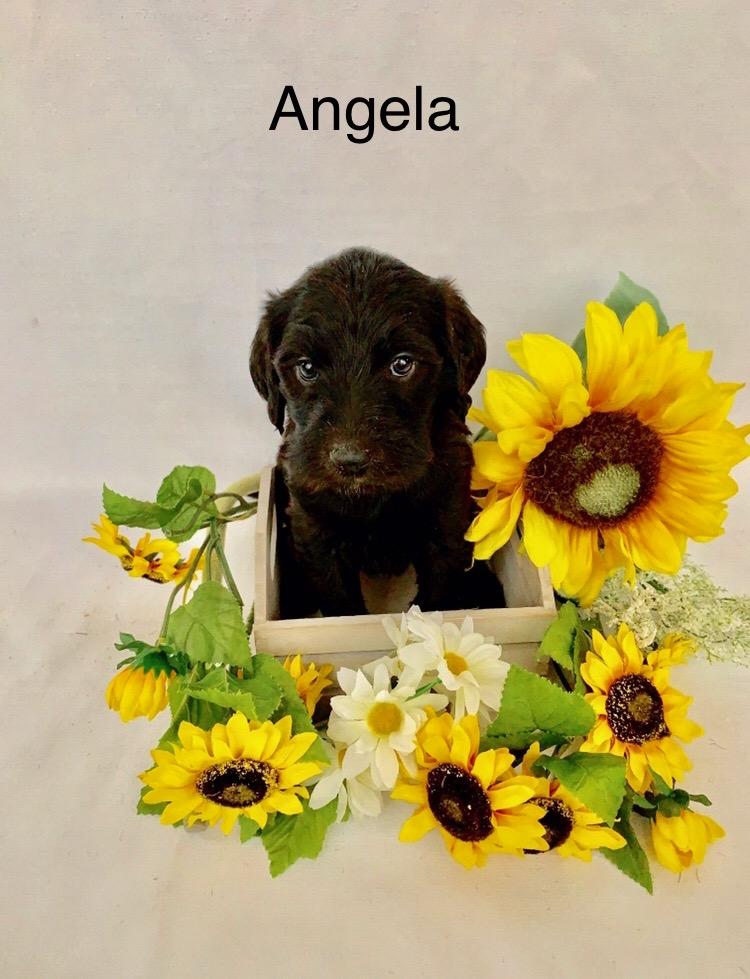 Angela-5 wks.JPG