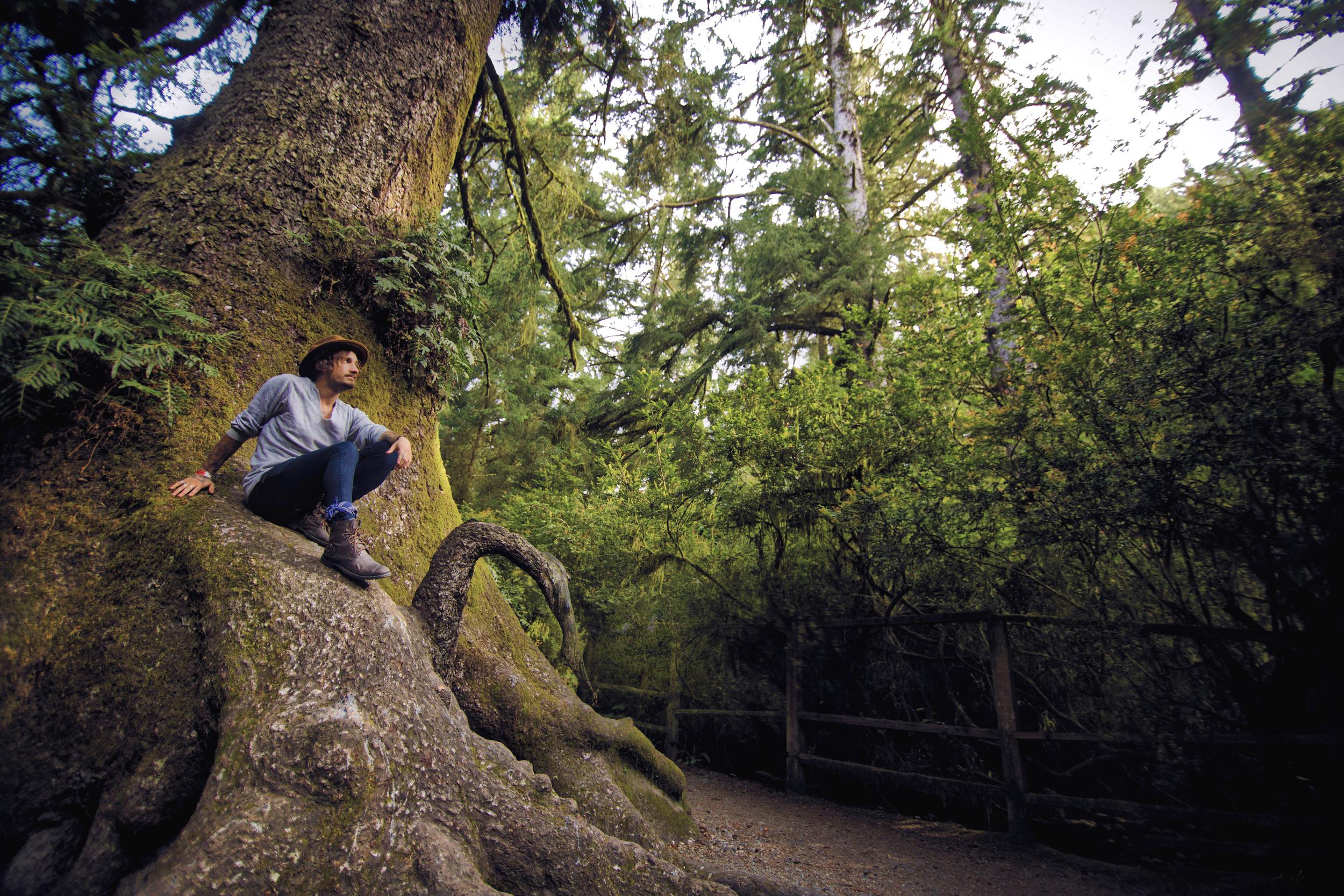 Redwood site.jpg