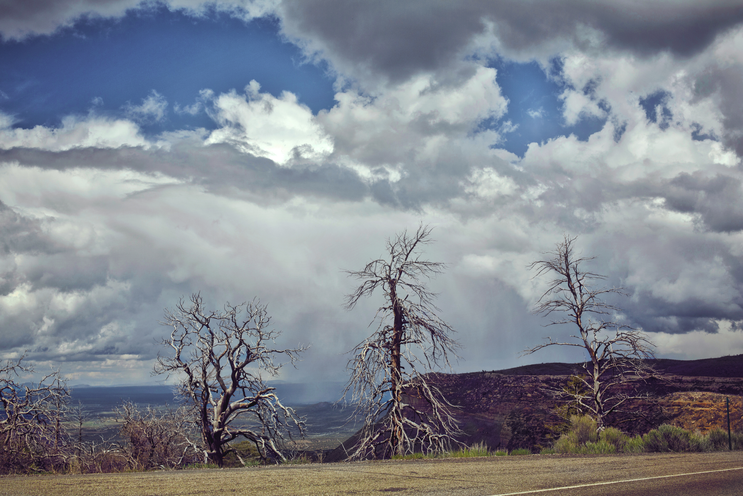 Three Trees Site.jpg