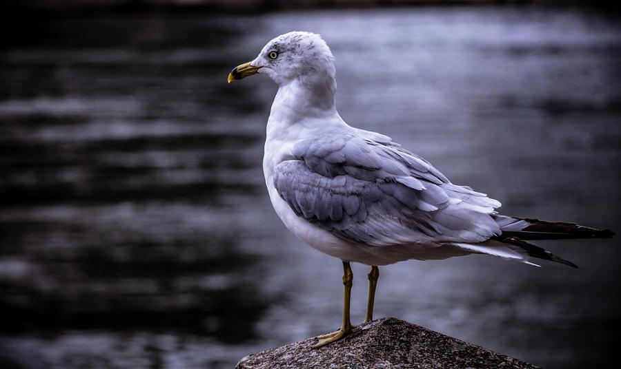 Bird in NYC