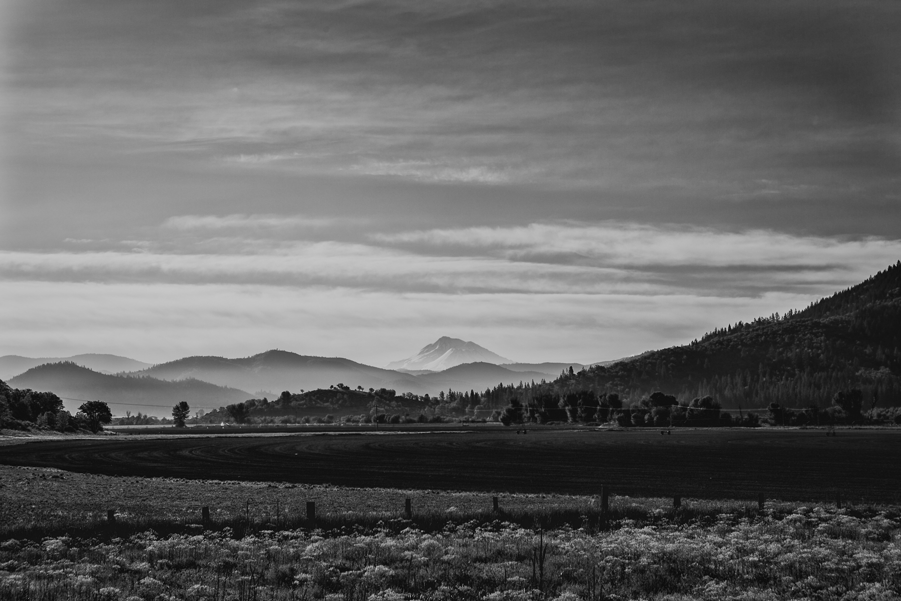 Farms and Mount Shasta